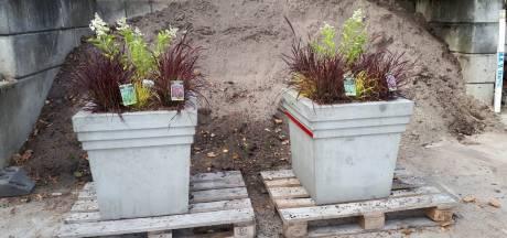 Plantenbakken in Hank opnieuw vernield