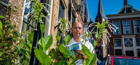 Hoe Deventer met pothoofdplant beroemd is en past in een rijtje met Amsterdam, Brugge en Gent