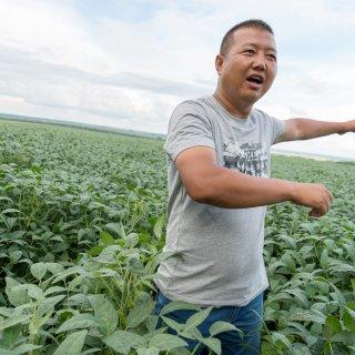 Meer soja zaaien? Chinese boeren voelen niets voor 'politieke taak'