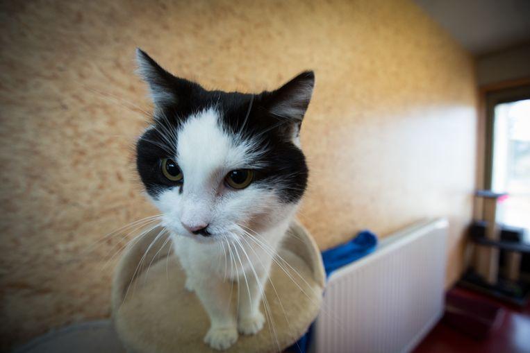 Om het probleem van zwerfkatten of katten zonder baasje aan te pakken, heeft de stad Hamont-Achel ook een overeenkomst met de vzw Noodasiel Lommel.