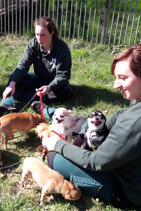 Negen chihuahua's van vermoorde Benny gezond in Dierentehuis Arnhem