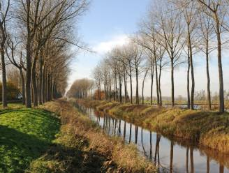 Bomen langs Leopoldkanaal verdwijnen, maar worden wel vervangen
