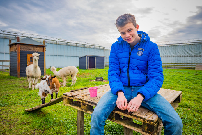 Tom met de alpaca's Doutzen en Dobi en de geit Daisy.