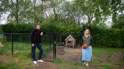 """Vandalen schieten cavia's en konijnen dood op basisschool De Boomgaard in Wommelgem: """"Onbegrijpelijk wat hen bezield heeft"""""""
