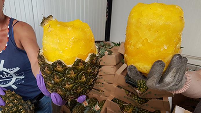 Opengewerkte ananassen, waarin de cocaïne werd gevonden.