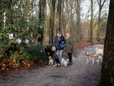 Baasjes delen kerstwensen via opgetuigde 'hulstwensboom' op de Hullenberg