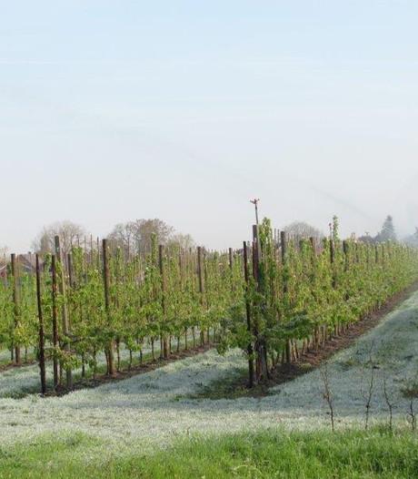 Sproeien tegen vorstschade voor behoud fruit in Velddriel