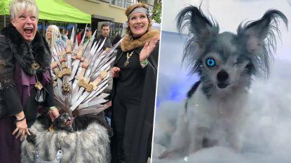 Herken jij ze? Deze honden houden optocht verkleed als 'Game of Thrones'-personages