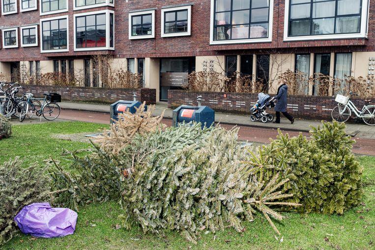 Kerstbomen op de Afroditekade. Beeld Jakob Van Vliet