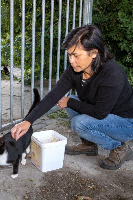 Kattenvanger van Helmond heeft nog één lastig beestje