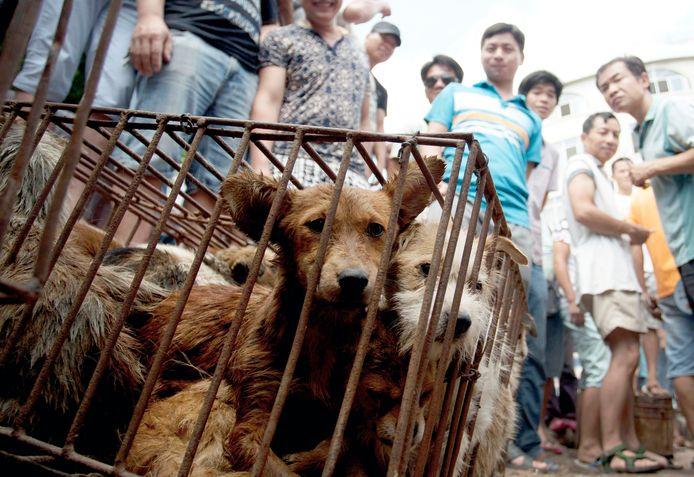 Honden die worden verkocht voor consumptie op een Chinese markt.