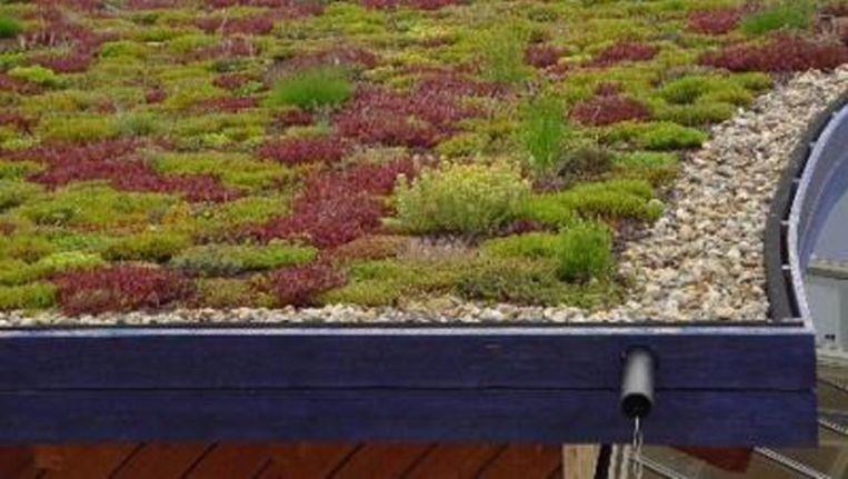 Een groen dak isoleert goed en zorgt ervoor dat het regenwater langzamer wordt afgegeven waardoor het riool minder belast wordt. Beeld