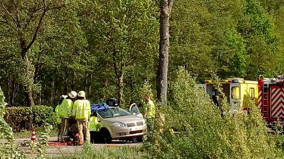 Auto knalt tegen boom op Universiteitslaan