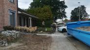 Politie speelt herdershond in Berendrecht