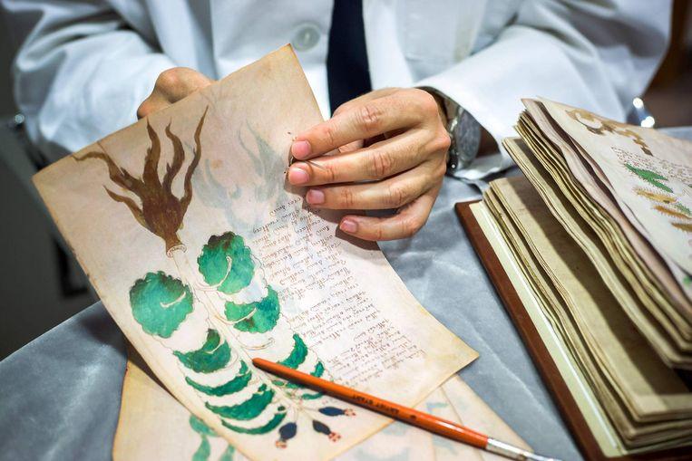 Het Voynich Manuscript is een bundel van 240 pagina's, gevuld met een handgeschreven tekst, tekeningen van onbekende planten en ingewikkelde symbolen. De tekst is zo'n 500 jaar oud - dat staat vast - maar wat erin staat, weet niemand.