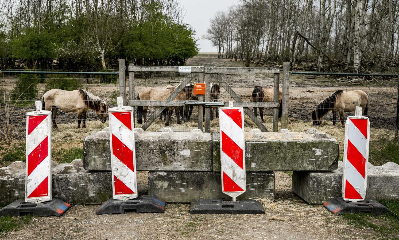 Betonblokken van Staatsbosbeheer versperren de weg naar hekken bij de Oostvaardersplassen .