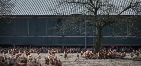 Taakstraf voor frauderende dierenarts Veendam