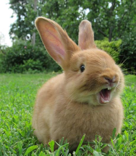 Vandalen smeren konijntje in met sop en laten schuim in hokken lopen