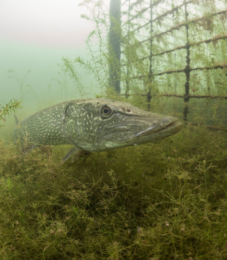 Zutphense onderwaterfoto in de prijzen bij internationale fotowedstrijd