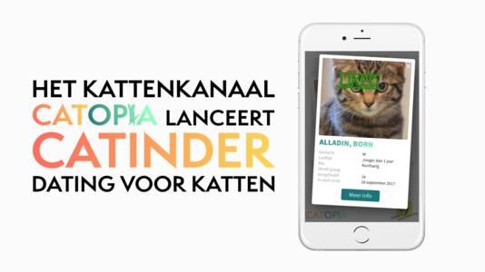 De app helpt kattenliefhebber en kat bij elkaar te komen.