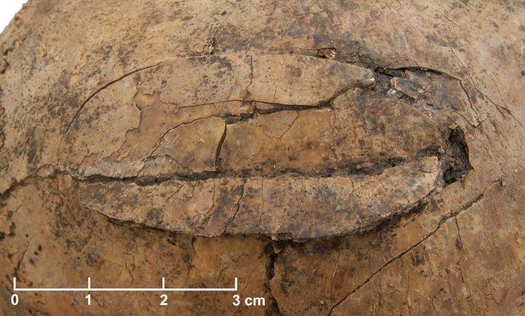 Een beschadigde schedel, gevonden in het massagraf nabij Frankfurt. Beeld Christian Meyer