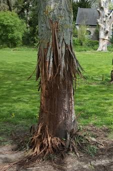 'Baasjes gebruiken bomen als training voor illegale hondengevechten'