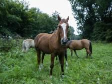 Paardenfokker Vianen wil ook paarden kunnen houden
