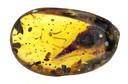 De kop van de vliegende dino werd ontdekt in een stuk barnsteen van 99 miljoen jaar oud.