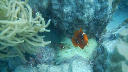 Communiceren met vissen van Great Barrier Reef? Geen probleem voor Arne (maar zijn vriendschap met spinnen ligt moeilijker)