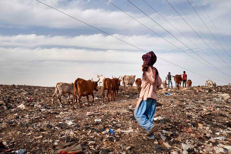 Een Fulani-herder met zijn vee bij een stortplaats in de buurt van een vluchtelingenkamp in Mali.  Beeld AFP