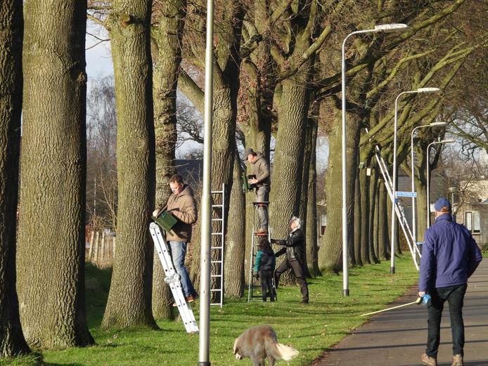 De vogelhuisjes worden opgehangen aan de eiken langs Het Wansink.