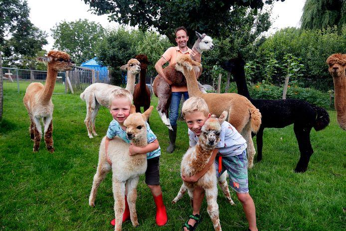 Bij de alpacahouderij in Almkerk werden drie alpaca's geboren. Tot grote vreugde van Reinier en zijn zoons Pieter (rechts) en Rinze.