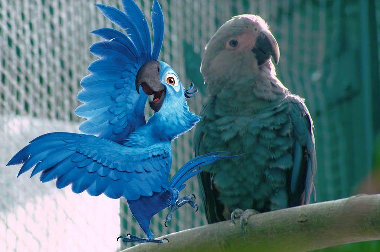 Wonderbaarlijk Acht vogelsoorten, waaronder de felblauwe papegaai uit 'Rio DY-44