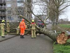 Flinke boom waait om en blokkeert de Willem Dreeslaan