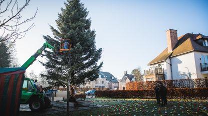 Warmste kerstboom staat in Sint-Martens-Latem