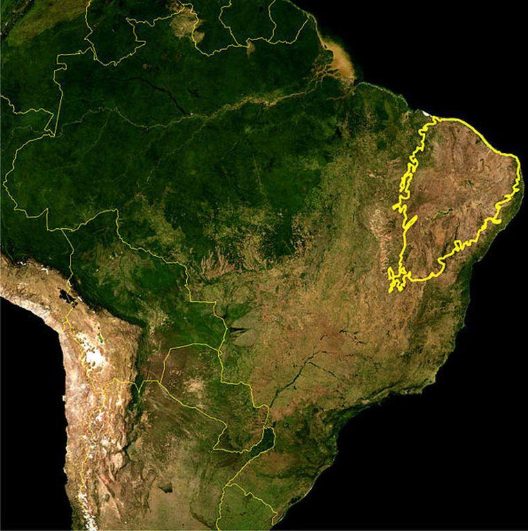 De caatinga Beeld Wikipedia