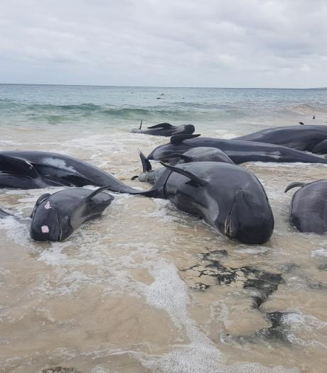 Aangespoelde walvissen slachtoffer van duikersziekte