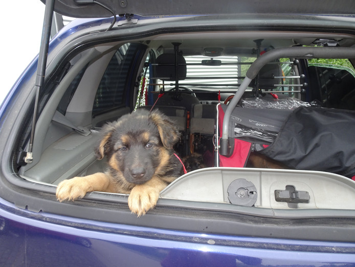 Auto ingepakt, hotel gereserveerd: maar wat moeten we nu met de hond?