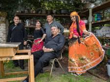 Zigeunerfestival in Westelbeers is intiem achtertuinconcert