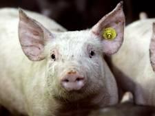 Helmondse gaat viral met afscheidsbrief aan Nederlandse boer