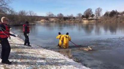 VIDEO. Helden! Brandweermannen redden hert dat door bevroren meer was gezakt