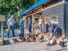 Speciale burendag zaterdag: met de hele straat naar de kippetjes