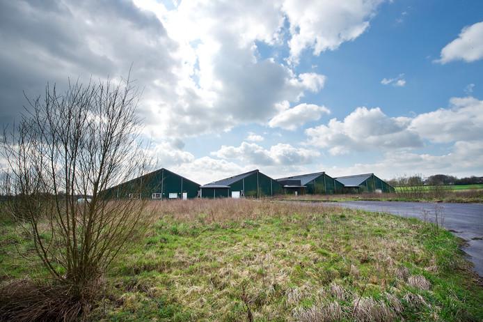 De laagstaande megafarm aan de Dennenkamp in Groesbeek.  Archieffoto Bert Beelen