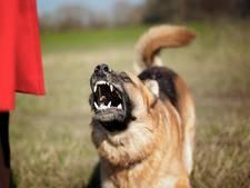 Grote herdershond belet sluiting drugspand in Sprang-Capelle