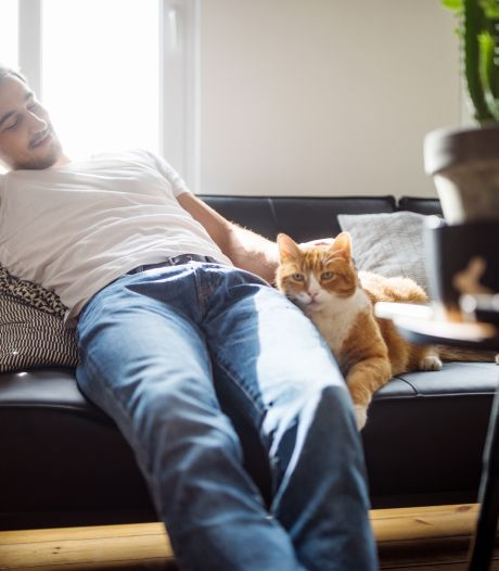 Les hommes avec des chats seraient perçus comme moins virils