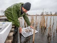 Vissers zetten glasaal uit in De Wieden als teken van vertrouwen in toekomst visserij