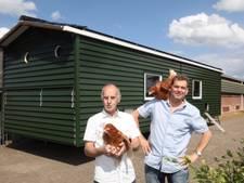 Kippen kamperen langs Groene Corridor tussen Oirschot en Eindhoven