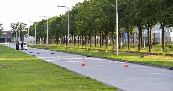 Groep ganzen doodgereden door politiewagen die op weg was naar noodsituatie in Tilburg.