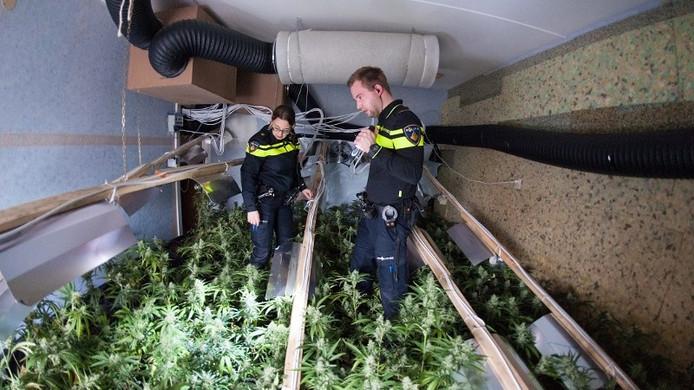 Agenten kijken rond in een van de hennepkwekerijen.