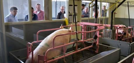 Victorie kraaien over varkenscentrum Sterksel schept verplichtingen